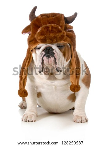bulldog - english bulldog dressed up like a bull isolated on white background