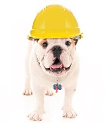 Bulldog Wearing a Yellow Construction Hard Hat