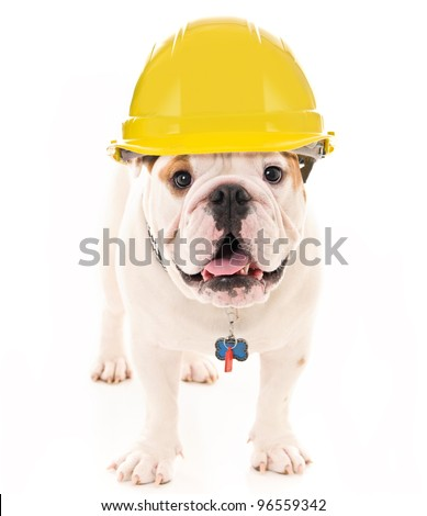 Bulldog Wearing a Yellow Construction Hard Hat