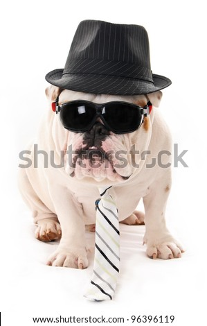 Bulldog Wearing Sunglasses, Hat and Tie