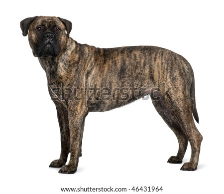 Reading Dog Body Language How to Understand Your Dog