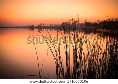 bulrush silhouette at Lake Velence, the northern shore of Lake Velence at sunset Stock fotó ©