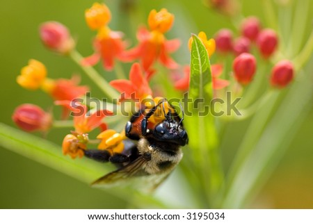 Bumble bee on some flowers