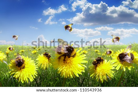 Bumble bees in the meadow of flowers