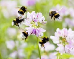 bumblebee carousel