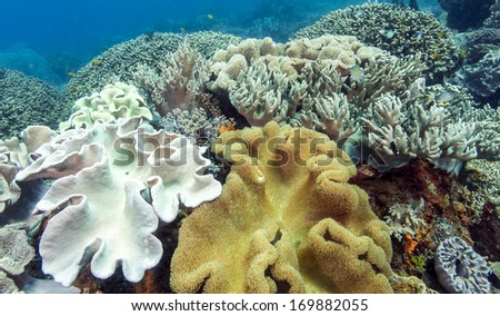 Bunaken National Marine Park. Bunaken is located at the northern tip of the island of Sulawesi, Indonesia