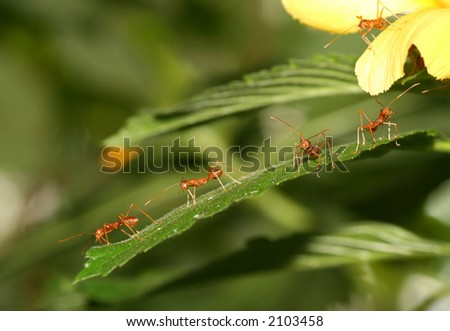 Bunch of ants on a leaf
