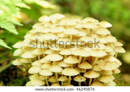 Bunch of autumnal forest fungi