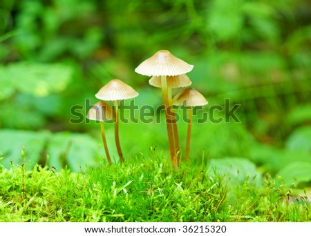 Bunch of autumnal fungi grows over moss