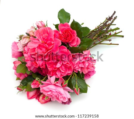 bunch of beautiful pink garden roses isolated on white background