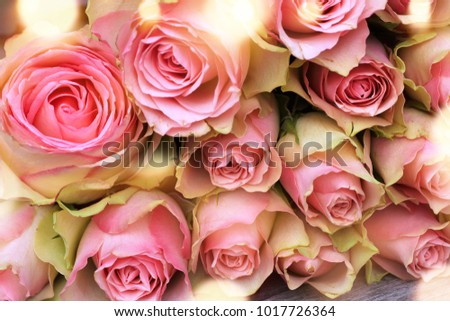 Bunch of beautiful pink roses with golden bokeh for mothers day close up #1017726364