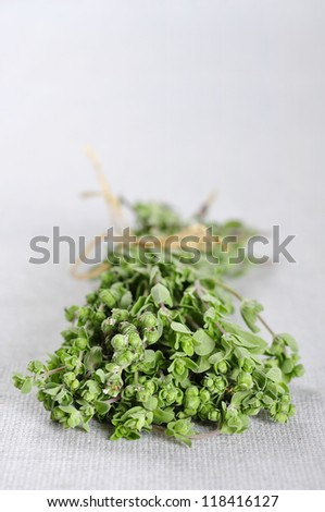 Bunch of blooming marjoram herb closeup on beige tablecloth. Small shallow DOF.