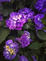 Bunch of bring violet flowers blooming in this spring. soothing and calming with a depth of colors and vibrance
