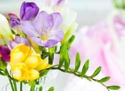 bunch of colorful freesia flowers
