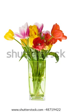 stock-photo-bunch-of-coloured-fresh-tulips-on-white-background-48719422.jpg