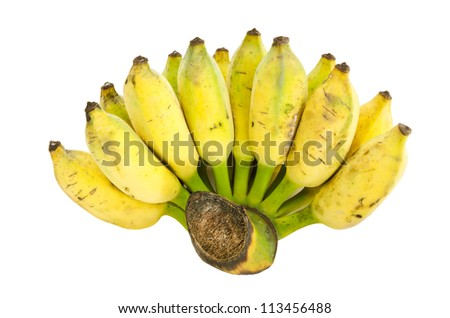 Bunch of cultivated banana isolated on white background, clipping path included - stock photo