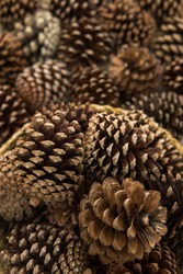 Bunch of dried blooming pine cone in the basket.
