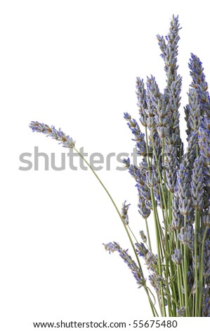 Bunch of dried lavender on white background. - stock photo