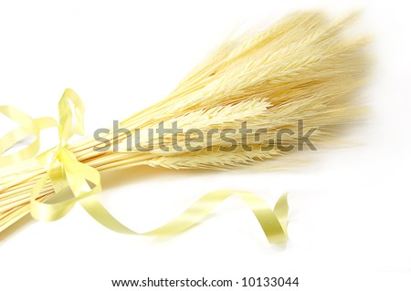 Bunch of ear of corn tied over white