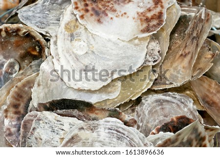 Bunch of empty oyster shells for decoration