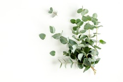 Bunch of eucalyptus on a white background.