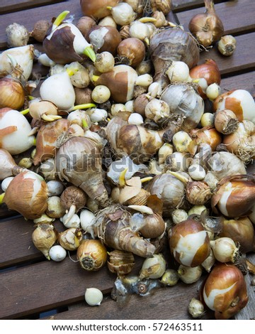 bunch of flower bulbs lying on a garden table