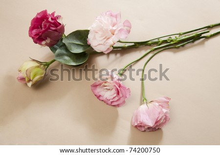 bunch of flowers insoleted on beige