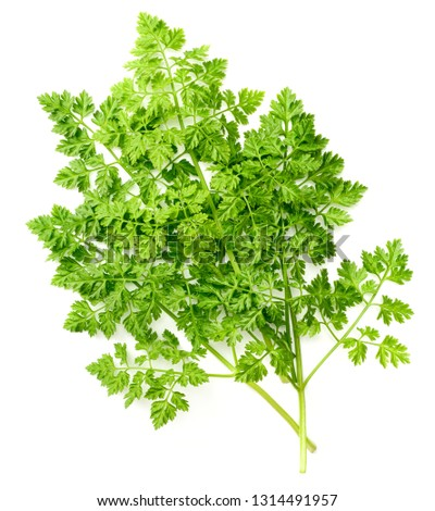 bunch of fresh chervil isolated on white background #1314491957