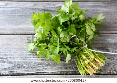 bunch of fresh cilantro on the boards, fresh herbs