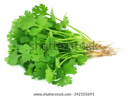 Bunch of fresh coriander leaves over white background #342103691