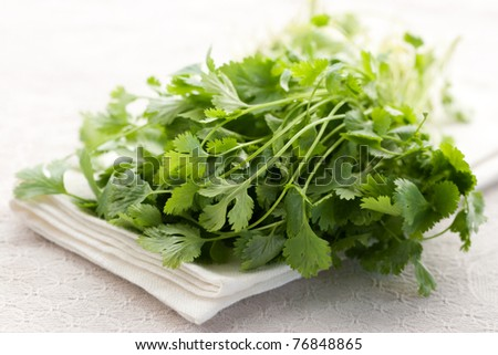 Bunch of fresh coriander on white background