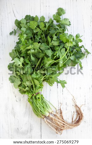 Bunch of fresh coriander or cilantro over distressed white wooden background.  Overhead view.