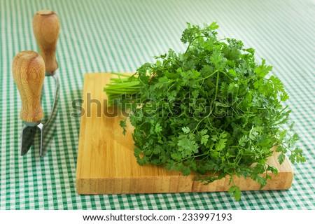 Bunch of fresh green coriander (cilantro) on a wooden chopping board, closeup