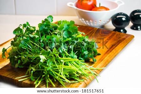 Bunch of fresh green coriander, cilantro on a wooden cutting board