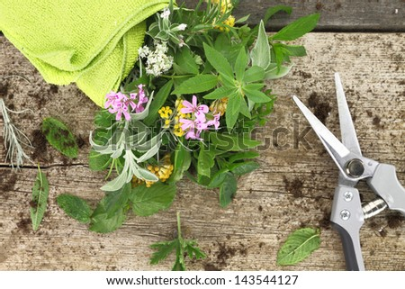 Bunch of fresh herbs and garden scissor on wooden background