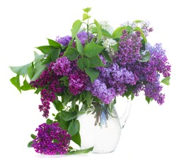 Bunch of fresh Lilac flowers  in glass pot isolated on white background