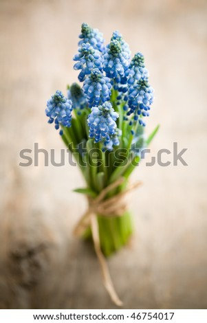 Bunch of fresh muscari flowers, shallow focus