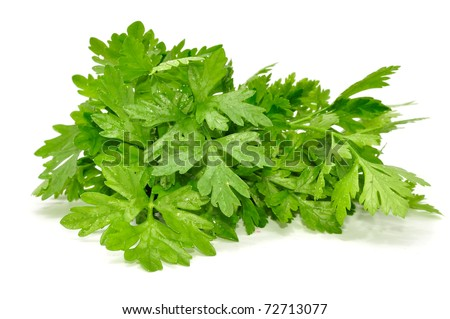 BUNCH OF FRESH PARSLEY ISOLATED ON A WHITE BACKGROUND - stock photo