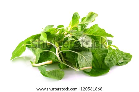Bunch of fresh spinach on white background