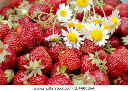 Bunch of fresh strawberries and daisies  - closeup