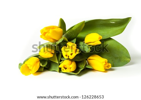 Bunch of fresh yellow tulips isolated on white background