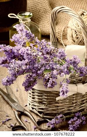 Bunch of freshly cut lavender in a basket