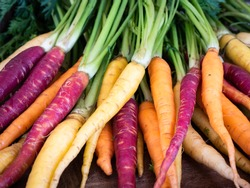 Bunch of freshly picked rainbow carrots with tops stacked waiting for dinner preparation