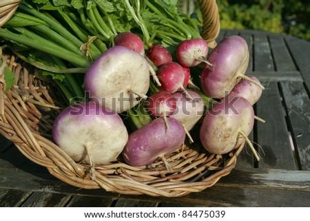 Bunch of freshly picked turnips on green