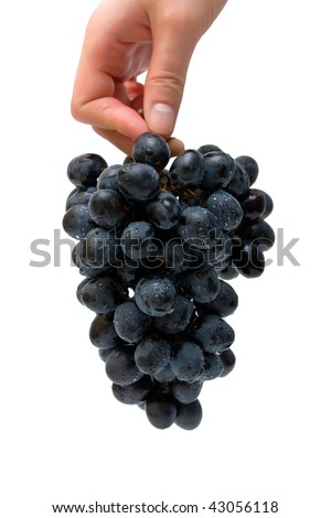 Bunch of grapes in female hand. Isolated.
