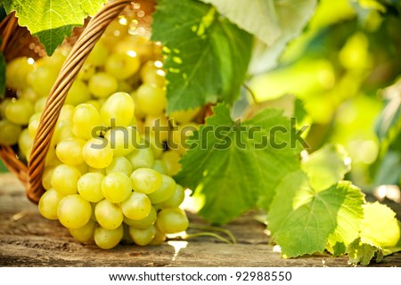 Bunch of grapes with green vine leaves in basket on wooden table against vineyard background in spring - stock photo