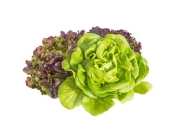 Bunch of green and red lettuce salad isolated on white