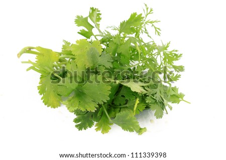 Bunch of green cilantro or coriander herbs on white background