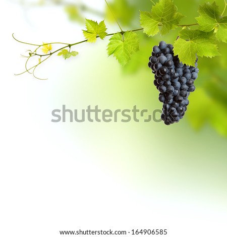 Bunch Of Green Vine Leaves And Grape Vine
