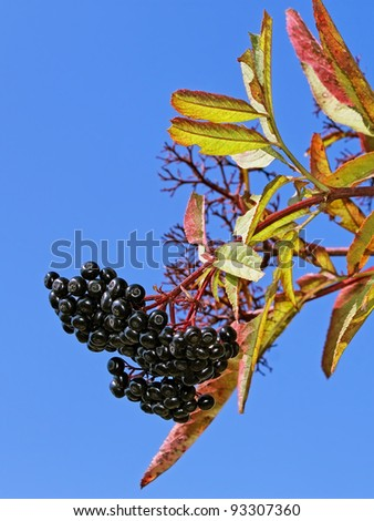 Bunch of in autumn against the background of a blue sky